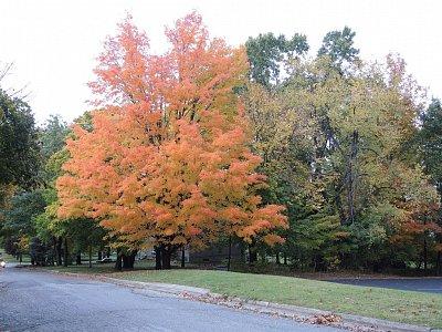 Podzimní zbarvení okolí Hillsdale